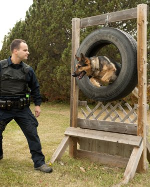 Police officer training with service dog